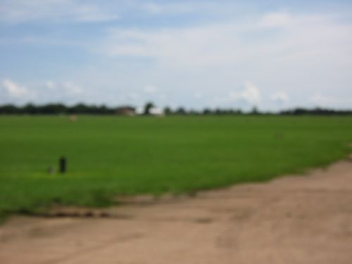 115_milbergergrassfarm022