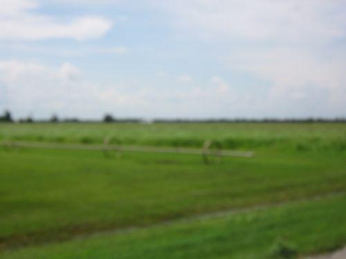 115_milbergergrassfarm026